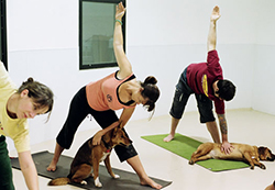 doga-yoga_2